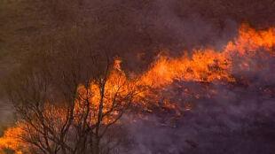 Nikt nie ucieknie przed czołem pożaru traw