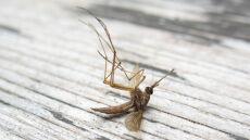 Środki chroniące przed malarią tracą skuteczność
