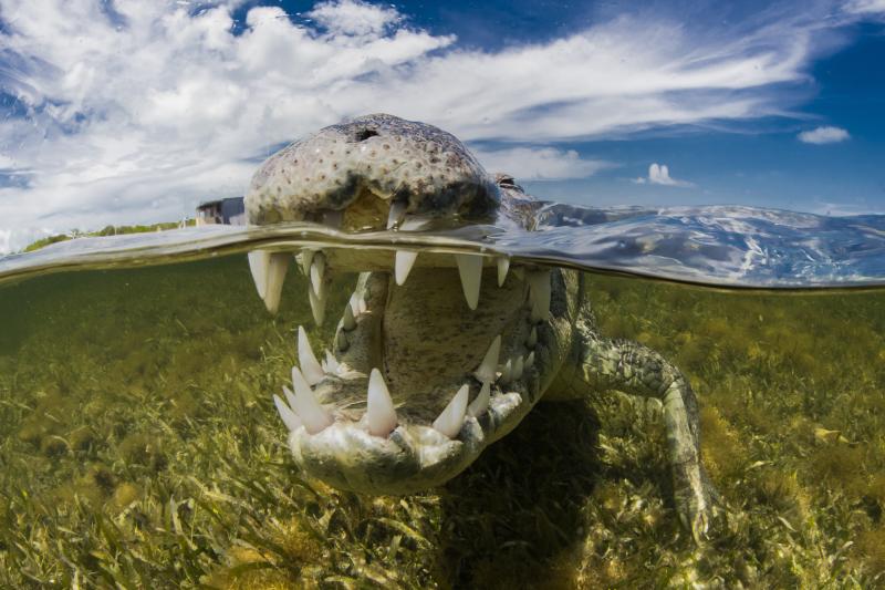 Krokodyl na zdjęciu Jakuba Degee