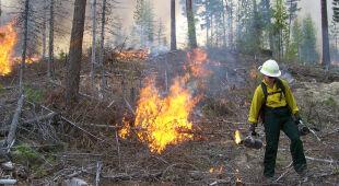 Susza szkodzi nie tylko uprawom rolniczym, zagrożone są też lasy