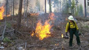 Średnie i duże zagrożenie pożarem. Podczas pobytu w lesie i okolicy zachowajmy ostrożność