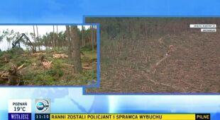 Wielka akcje leśników w Borach Tucholskich (TVN24)
