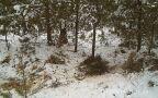 Wilki pojawiły się w Olbrachtowie