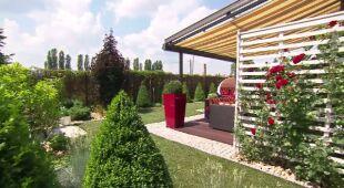 Ogród z nietypowym trawnikiem (odc. 468)